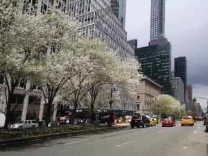 Park Avenue, NYC, in early spring